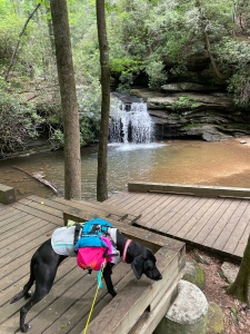 A wooden boardwalk butts up against a small waterfall, with smoothed granite stones and a pool of spring water. A black dog sniffs the ground on the boardwalk.
